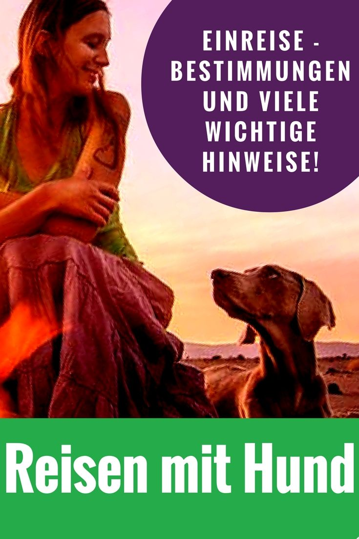 Alles was Du beachten musst, wenn Du mit Deinem Hund auf Reisen gehst!