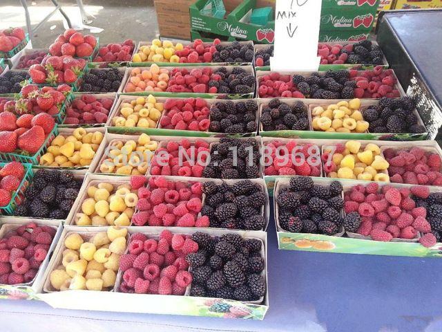 200/saco de Semente de Framboesa misturada cores Super Grande Frutas Sementes De Framboesa para vasos de flores plantadores
