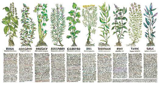 Kitchen Medicine Poster | Pioneers Press