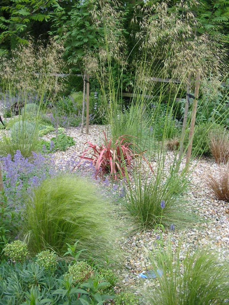 gravel garden and ornamental grasses