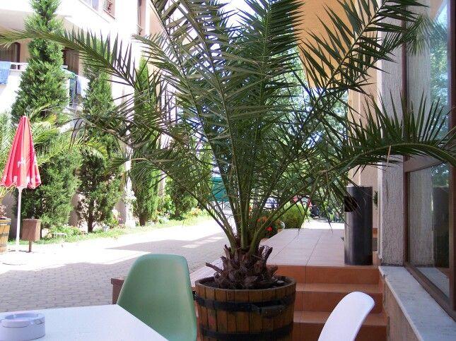 Palm ♣♧