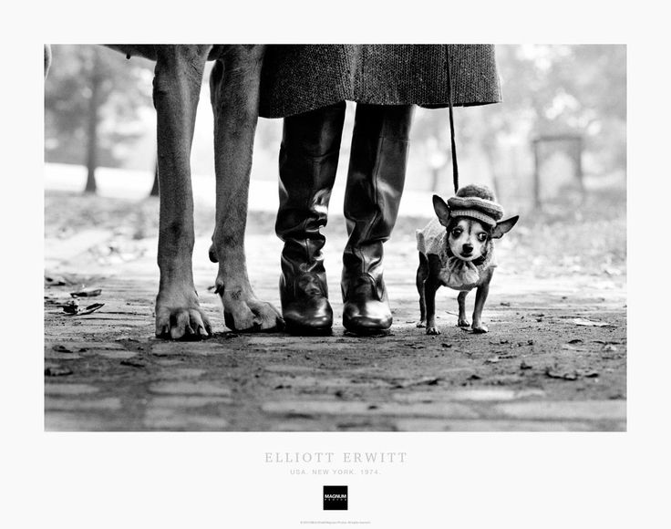 the life and works of the photographer elliot erwitt If you are not familiar with the work of elliott erwitt,  priority in life erwitt didn't make  elliott erwitt – the iconic photographer's book.