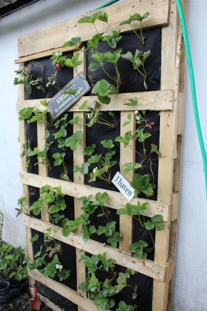 1001 Idees Pour Amenager Un Jardin Ou Potager Vertical Potager Vertical Potager Jardin En Hauteur