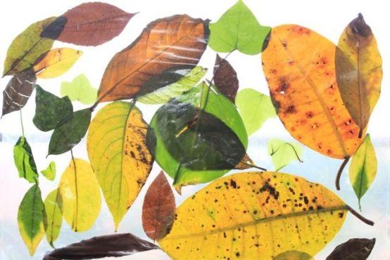 Collage de hojas: actividad de observación de la naturaleza | Blog de BabyCenter