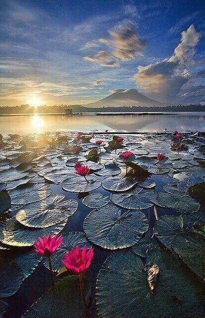 The color is amazing in this photo. Sampaloc Lake Laguna, Philippines