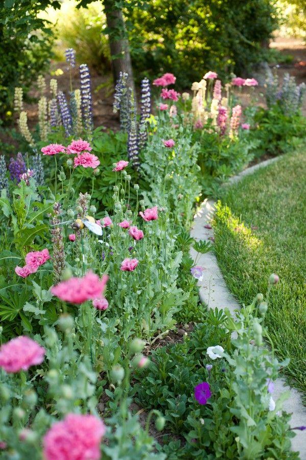 Cottage garden border with concrete mowing strip