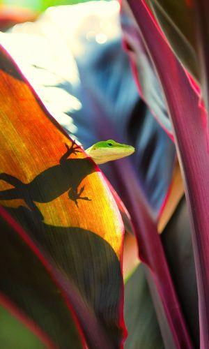 Download Wallpaper 480x800 Gecko, Lizard, Face HTC, Samsung Galaxy S2/2, Ace 480x800 HD Background