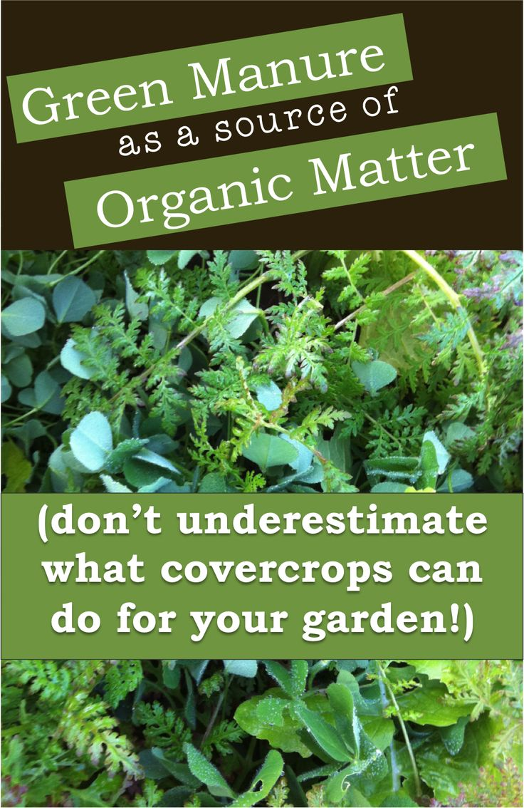 Green Manure/Cover Crops can do amazing things for your garden.