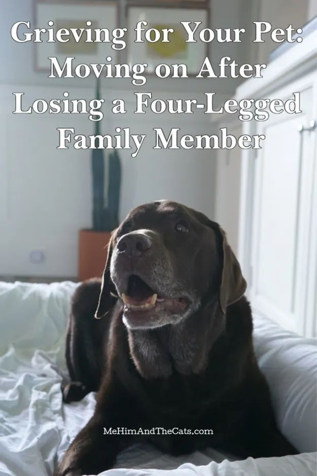 Grieving For Your Pet Moving On After Losing A Four Legged Family