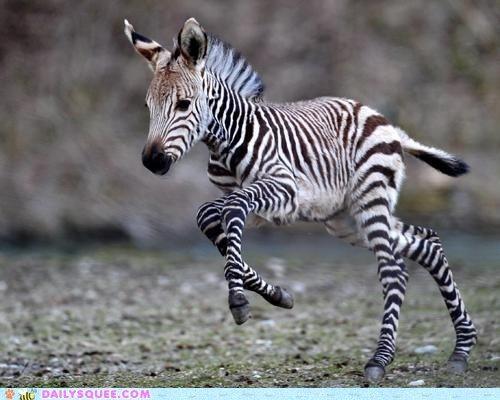 Baby Zebra :)