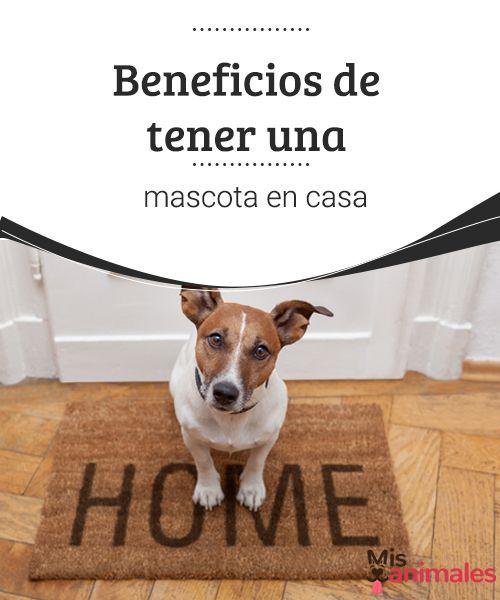 Beneficios de tener una mascota en casa  ¿Tienes pensado llevar un gato, un perro u otro animal a casa? Consulta en este artículo, los numerosos beneficios de tener una mascota. #casa #adoptar #mascota #consejos