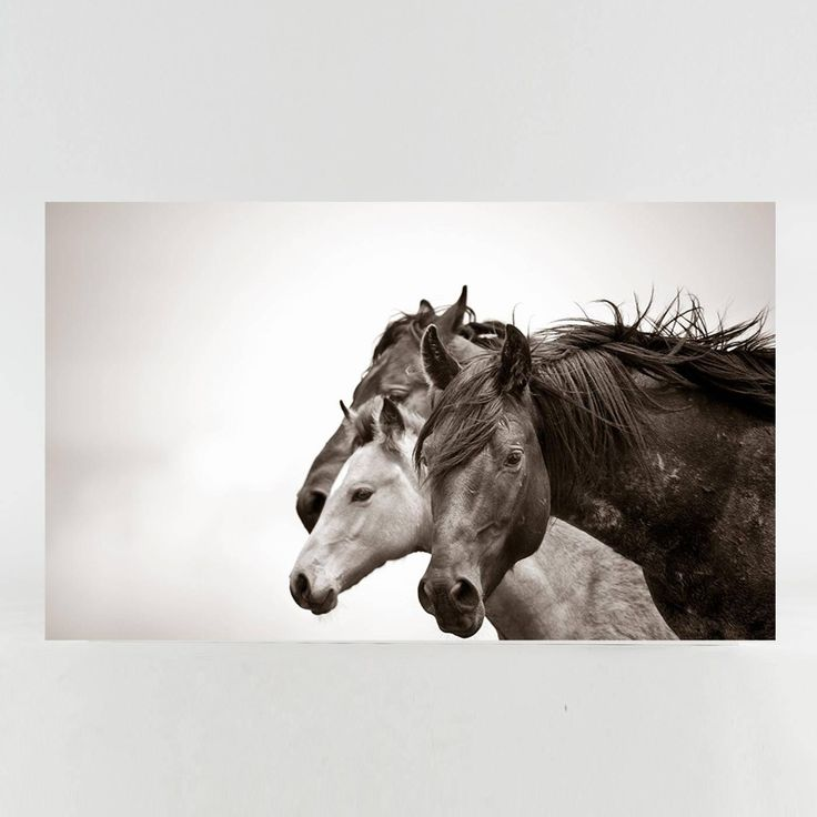 Together We Stand | See more Figurative Photography at https://www.1stdibs.com/art/photography/figurative-photography on 1stdibs