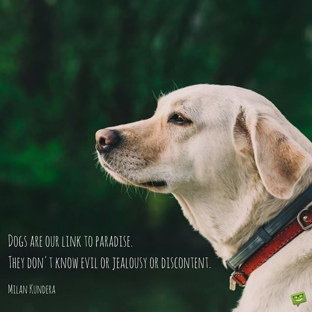 Dogs are our link to paradise. The don't know evil or jealousy or discontent. Milan Kundera.
