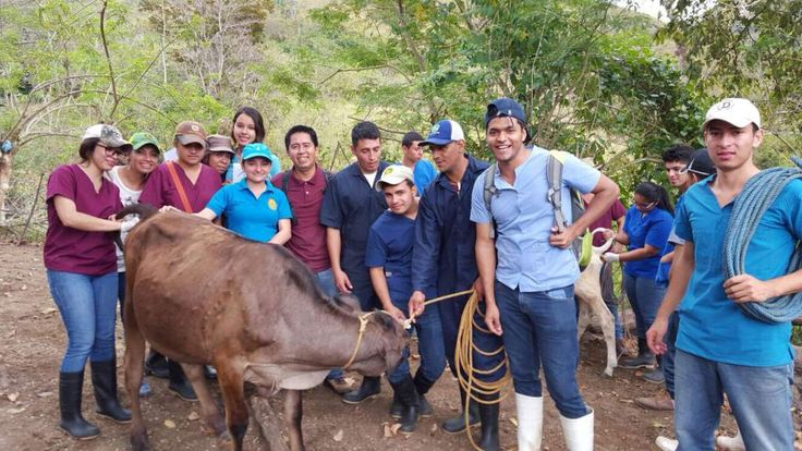 Honduras: Crece controversia por la calidad de la carrera de Medicina Veterinaria Colegio Médico Veterinario afirma que estudiantes mencionaron las áreas con falencias El CES anunció que la matrícula de primer ingreso para los interesados en Medicina Veterinaria de la UNA quedaba suspendida.