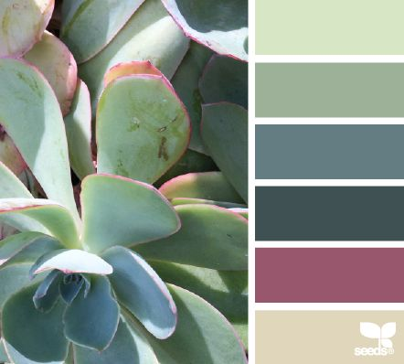 Succulent Hues - http://design-seeds.com/index.php/home/entry/succulent-hues18