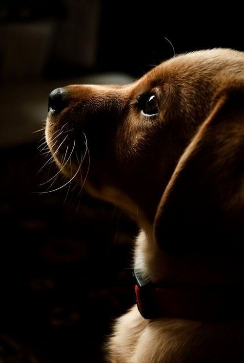 The beauty of a puppy ~ http://something-everything-nothing.tumblr.com/post/102080249741/mistymorrning-http-imgfave-com