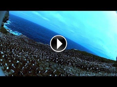 Un #aigle voleur filme les #pingouins depuis le ciel  http://www.minion.fr/un-aigle-voleur-filme-les-pingouins-depuis-le-ciel/154/