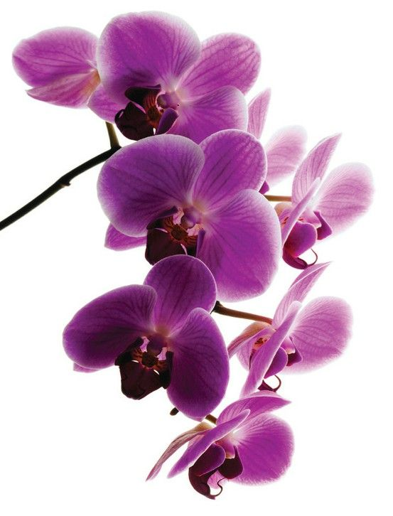 best orchidsthe most beautiful flower and there are, Beautiful flower