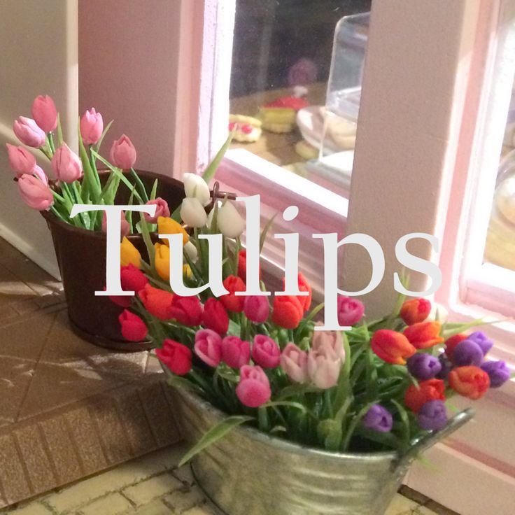 how to: miniature tulips