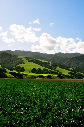 The Salinas Valley. Home sweet home!!!