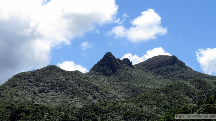 El Yunque National Forest – Rain Forest 101 | Puerto Rico Day Trips Travel Guide