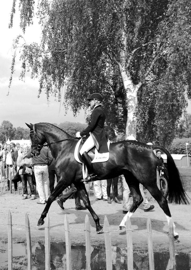 """Ingrid Klimke, hier mit Vielseitigkeitspferd Tabsaco, bildet auch Dressurpferde """"vielseitig"""" aus: www.pferdemaedchen.net/content/dvd-ingrid-klimke-und-dressurpferd-just-paul"""