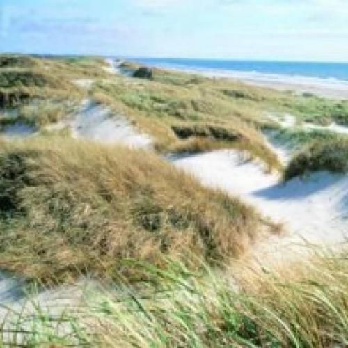 #Vejers family camping and cottages zona Esbjerg  ad Euro 73.00 in #Pensione esbjerg #Esbjerg