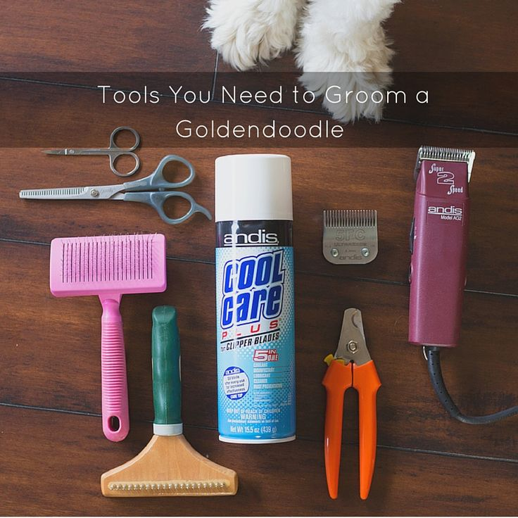 If you don't want your pup to be made fun of by all the other dogs, it is important to know of and have the right goldendoodle grooming tools on hand.