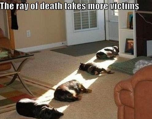 Dog heaven: Cat, Puppies, Houses, Funny Dogs, Sun Ray, Pet, Sunray, Funny Animal, So Funny