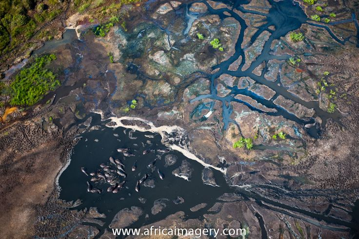 Aerial view of the iSimangaliso Wetland Park (previously the Greater St Lucia Wetland Park) with Hippo (Hippopotamus amphibius) wallowing in a waterhole. KwaZulu Natal. South Africa