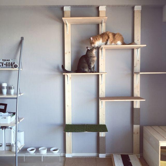 Reikoさんの、このは君,もみじ君,木材,輸入壁紙,壁紙,壁紙 グレー,DIY,北欧インテリア,マンション,ネコ,ねこのいる日常,ねこと暮らす,ねこ,猫,キャットウォークDIY,ディアウォール,WALPA壁紙,棚,のお部屋写真