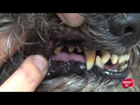 como evitar el mal aliento en perros - YouTube
