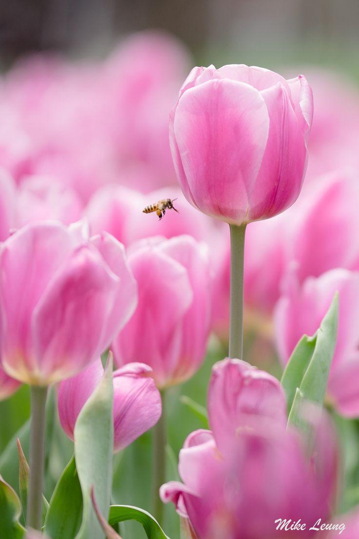 faire livrer des fleurs 70 #fleurs #bouquet