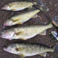 17 best ideas about lake erie fishing on pinterest for Lake erie fishing hotline