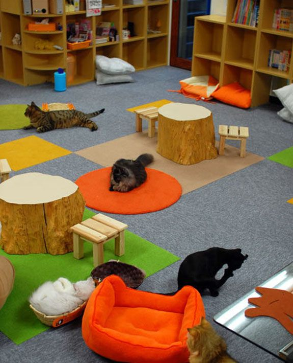 A cat cafe in Tokyo. Must see one of these!
