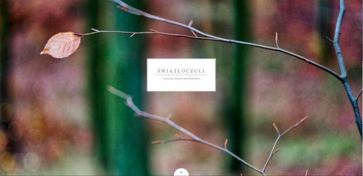 Profil internetowy (Tumblr) grupy fotograficznej Światłoczuli (Szczecin).