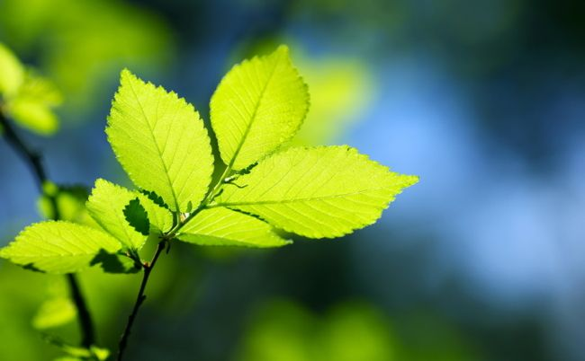 How Going Green Can Help Your House Sell