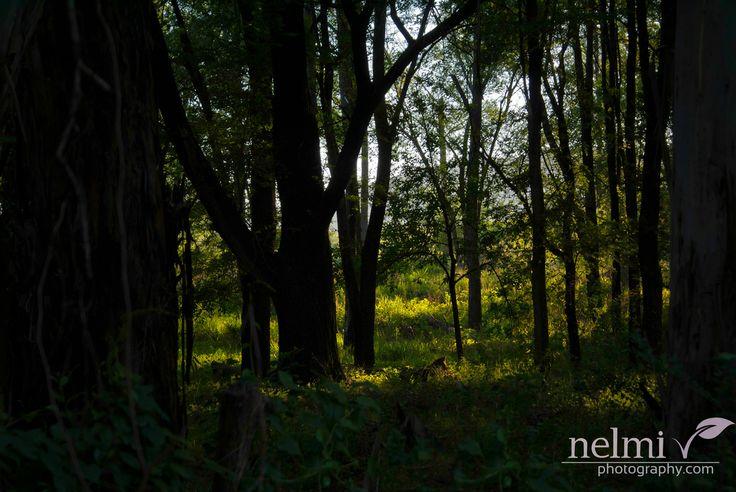 Sunlight through the trees in Santa Rosa de Calamuchita - Argentina.  http://nelmiphotography.com