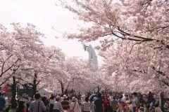 大阪の桜でよくニュースになってるのは造幣局じゃないだろうか いつもは通れない造幣局中に桜がたくさん植えられていて開花したときだけどうぞーたのしんでー通り抜けだけだけどなんて感じで 例年だと4月中旬ごろ今年も11日から17日まで うんうん春だ 日没後もライトアップがあるよ ただ本当に通り抜けだけなんだ 飲食禁止もちろん禁煙ペットも入れません 自転車も禁止ね  いやせめてお酒は飲みたいというなら万博記念公園だな 日本さくら名所100選万博記念公園桜まつりは今週末の3月25日から4月9日 夜はもちろんライトアップ 開園時間は21時まで延長お酒も飲める ただしマナーは守りましょうねもちろん運転禁止 バーベキューしたい人は予約したらOK 他にもイベントがあって全国うまいもん大集合ガレージセール全国大陶器市と魅力的  開花ももうすぐ見たいなのでしっかり花見の予定を立ててみようか tags[大阪府]