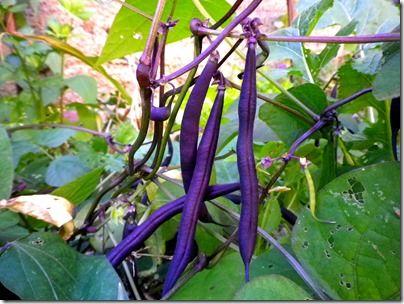 Les 38 meilleures images propos de jardin sur pinterest polices d 39 criture planters et facebook - Quel legume planter en juin ...