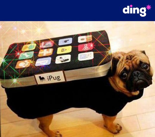 Mom! Do I have to wear this?!!! Sending top-up with ding* is so simple even our puppy friends like to use it! Connect with someone special today!   www.ding.com