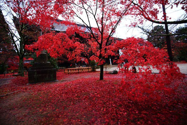 高画質 紅葉 真如堂 写真 綺麗 京都
