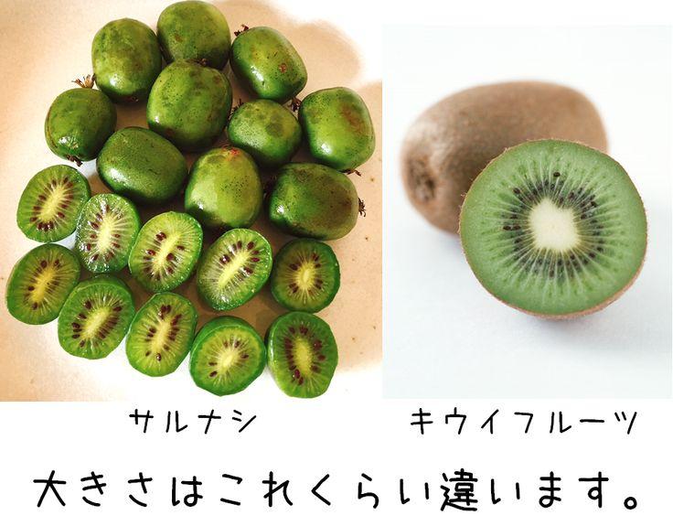 キウイフルーツの赤ちゃん?   http://subaru25.official.jp/opinion-558/  #サルナシ