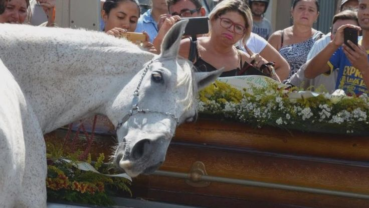 Horse Lays His Head On Coffin As He Mourns The Loss Of His Human Best Fr...