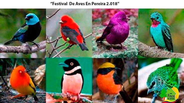 Alquiler de Fincas en Pereira Se Transporta Al Festival De Aves. https://www.fincasdeturismo.com/alquiler-de-fincas-en-pereira-se-transporta-al-festival-de-aves/?utm_campaign=crowdfire&utm_content=crowdfire&utm_medium=social&utm_source=pinterest  #AlquilerdeFincas #Fincasparaalquilar #FincasenArriendo #AlquilerdeFincas #CasasCampestres #AlquilerdeFincasenPereira #Paquetesturísticos