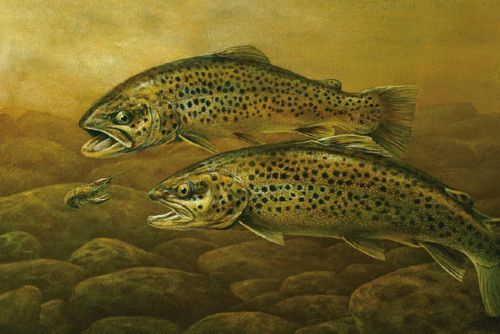 1161 best images about trout on pinterest the fly fish for Best trout fishing in pa