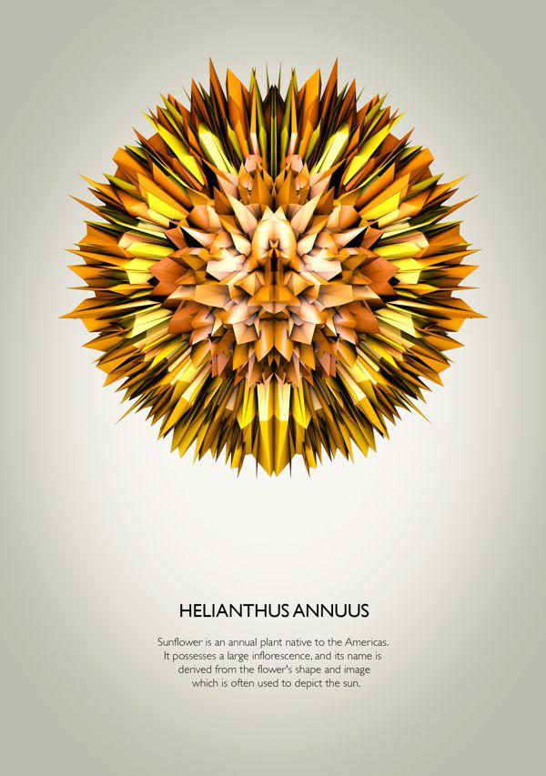 Concept Flowers - Series #1 by Matteo Gallinelli & Giuliano Antonio Lo Re, via Behance
