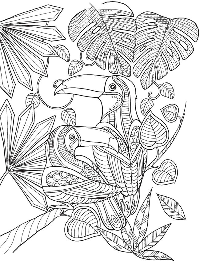 Keep Calm And Color Birds Of Paradise Coloring Book Adult PagesFree