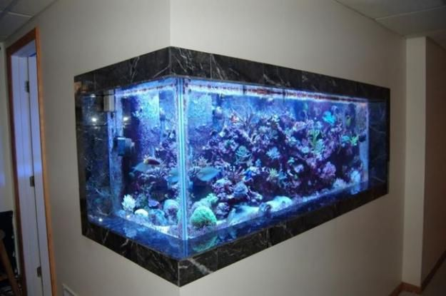 17 best images about in wall fish tanks on pinterest for Fish tank built into wall