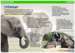 Taakkaarten natuur, techniek, geschiedenis en aardrijkskunde - Bekijk de blog op MontessoriNet